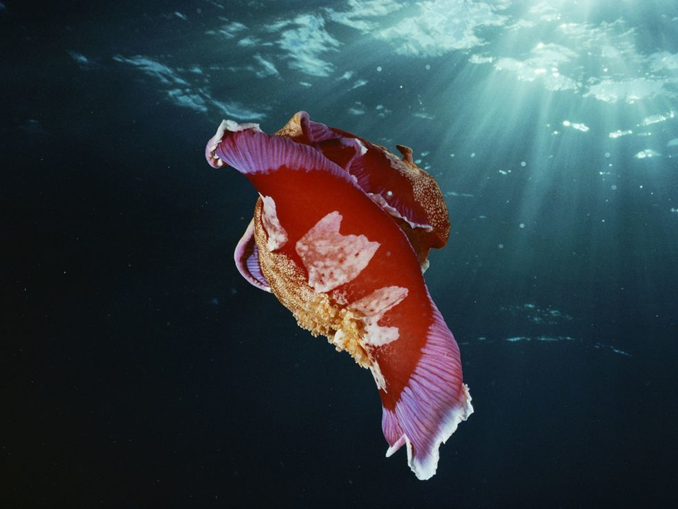 sunlight underwater Nudibranchia HD Wallpaper