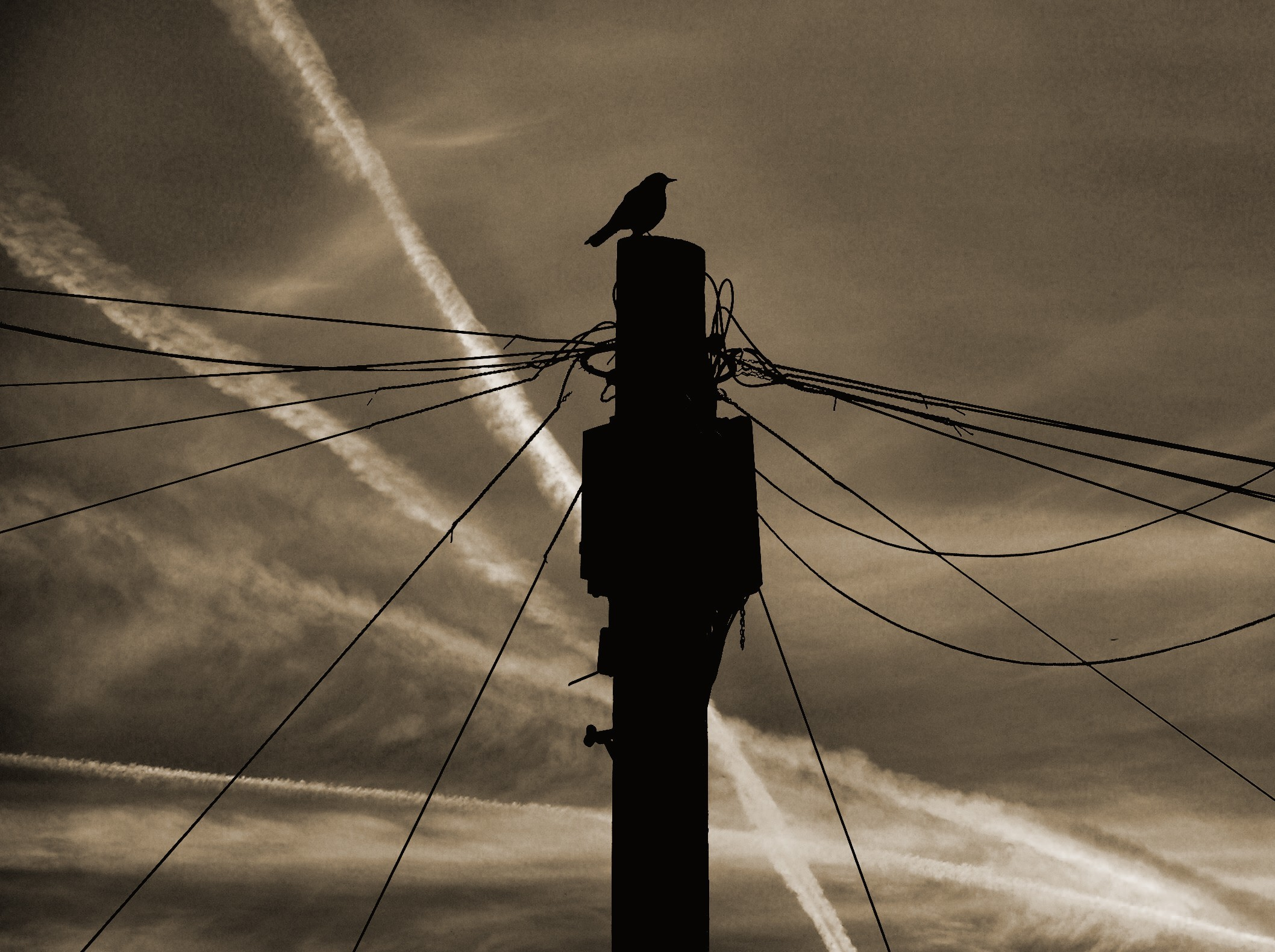 sunset Birds power lines HD Wallpaper