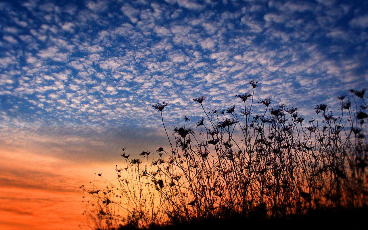 sunset clouds nature Flowers