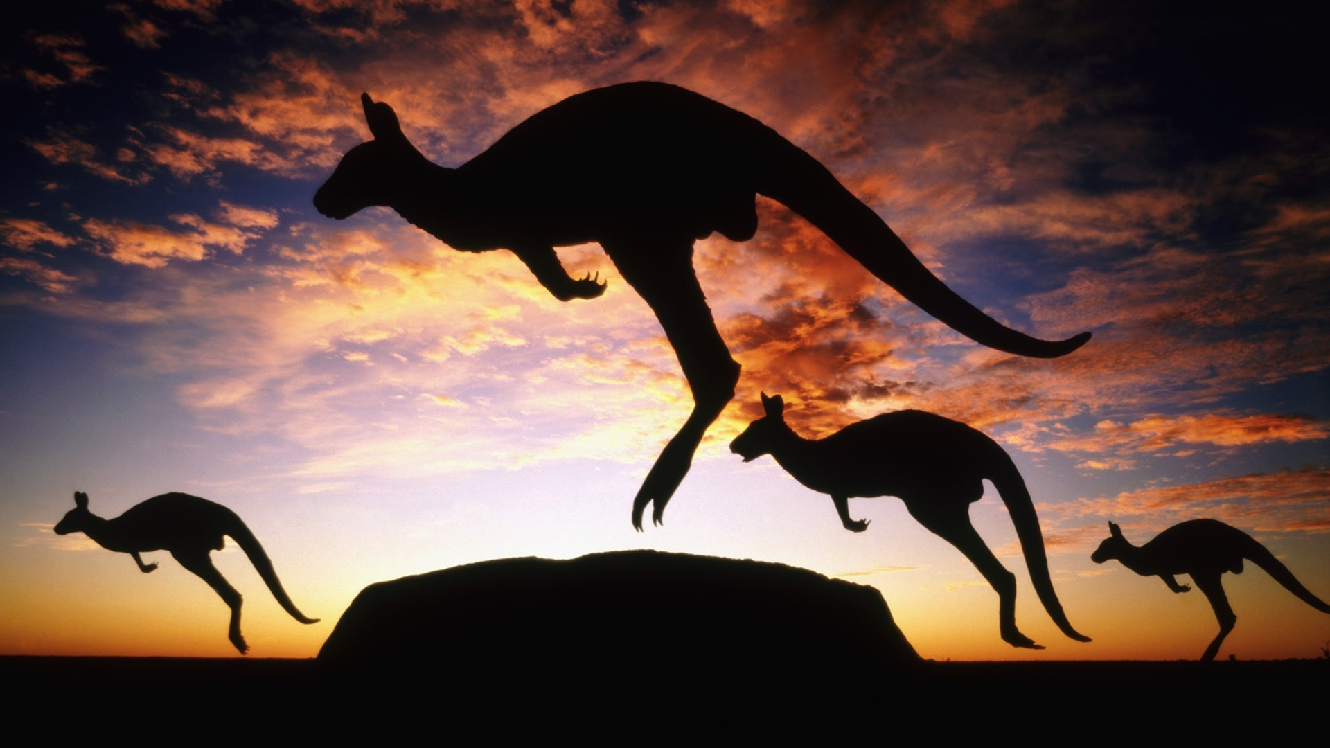 sunset clouds silhouettes kangaroos HD Wallpaper