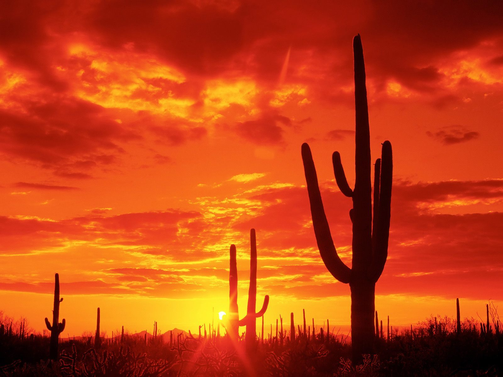 sunset deserts silhouettes Arizona HD Wallpaper