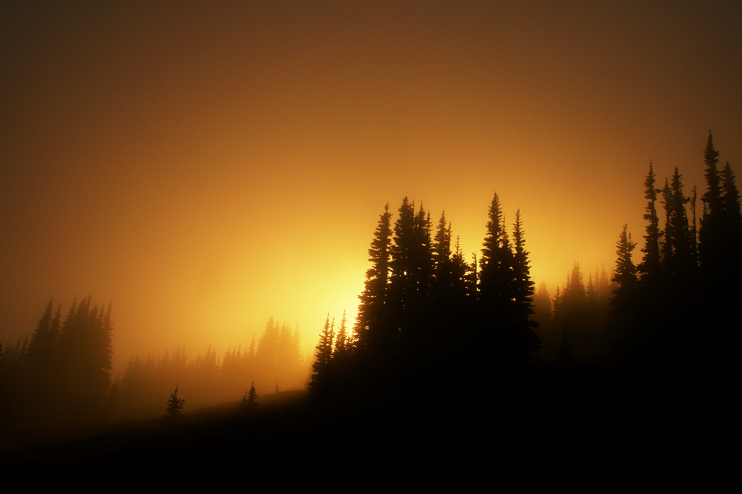 sunset forests silhouettes fog HD Wallpaper