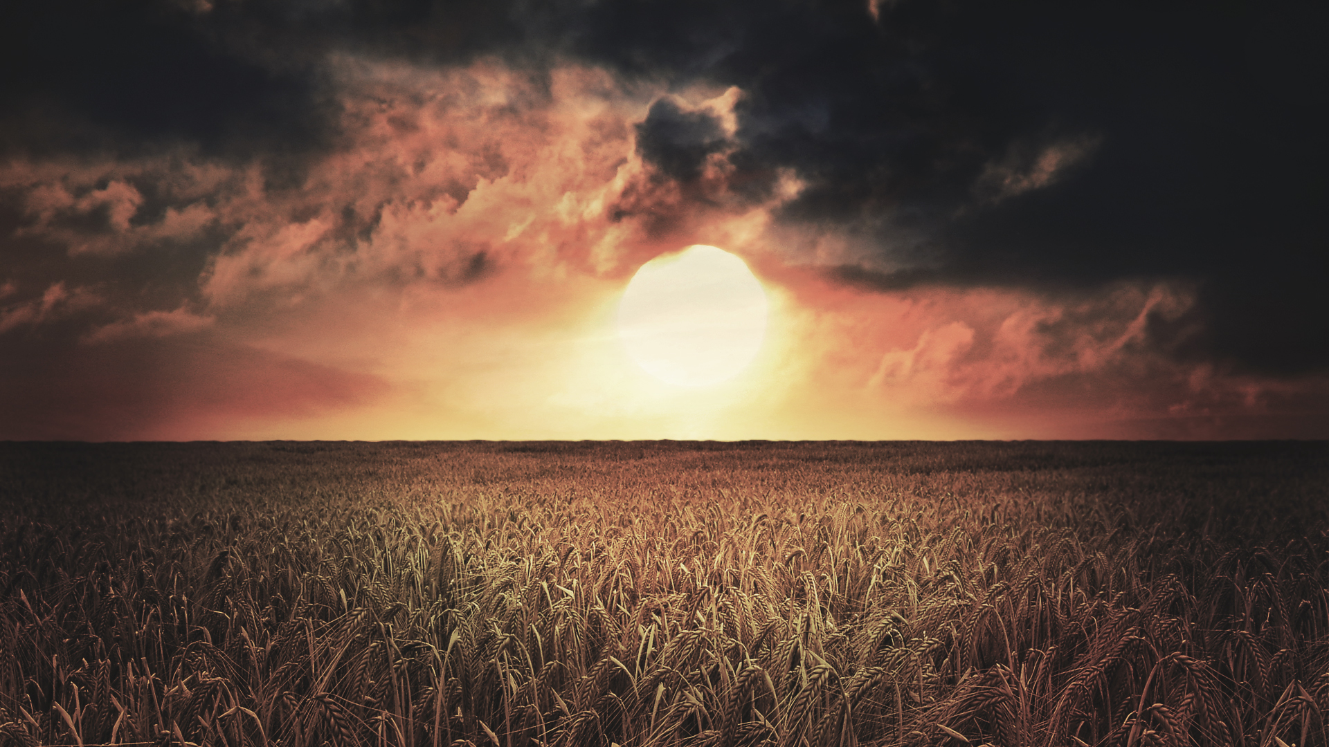 sunset Landscapes crops spikelets HD Wallpaper