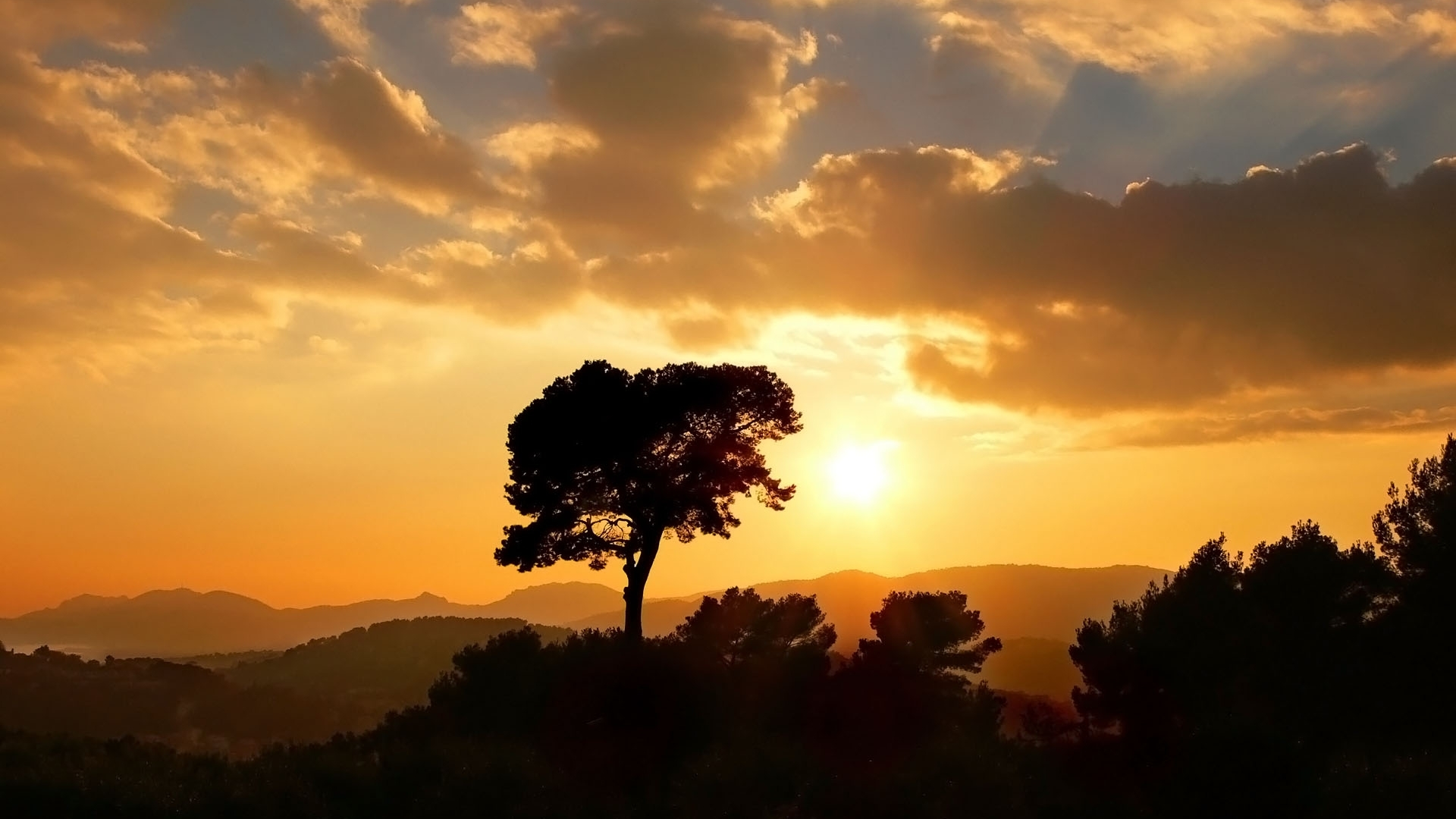 sunset Landscapes sun Trees HD Wallpaper