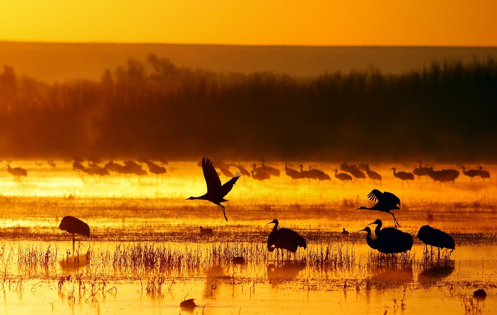 sunset nature Animals Birds