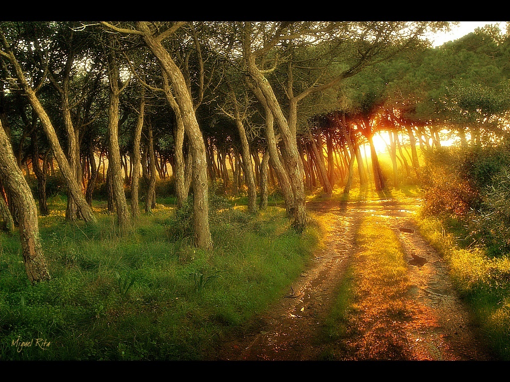 sunset nature Trees paths HD Wallpaper