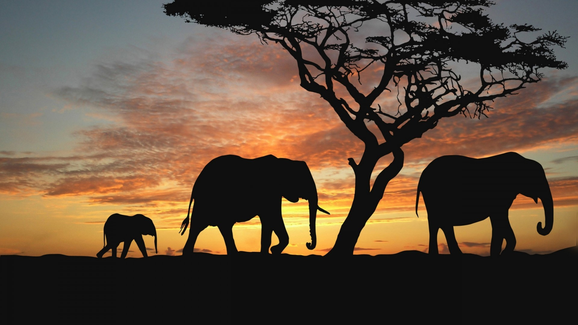 sunset Trees Animals silhouettes HD Wallpaper