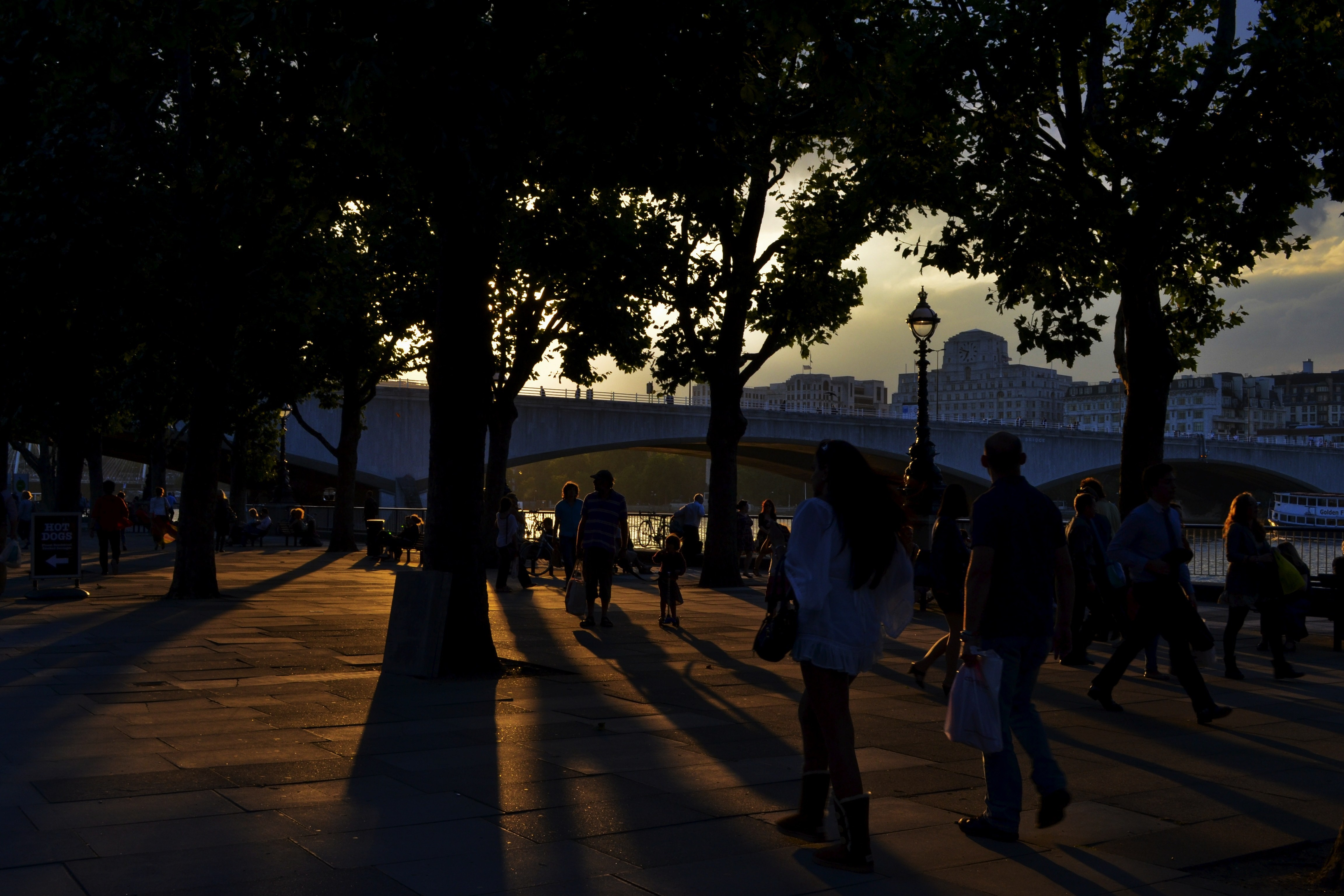 sunset Trees London shadows HD Wallpaper