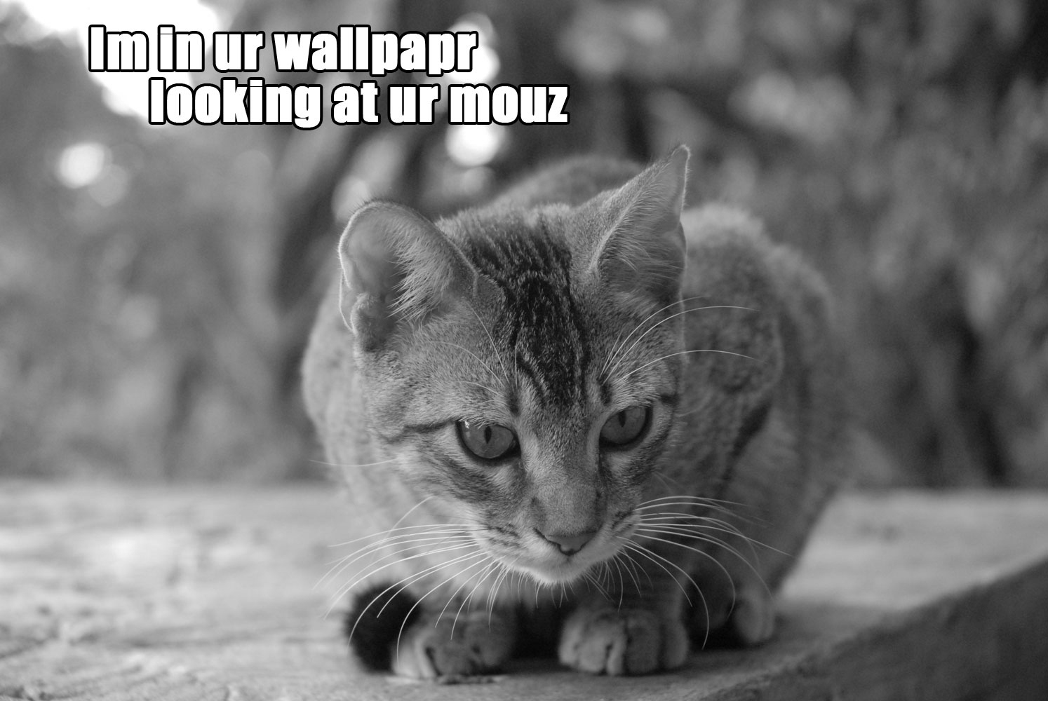 text cats Quotes grayscale