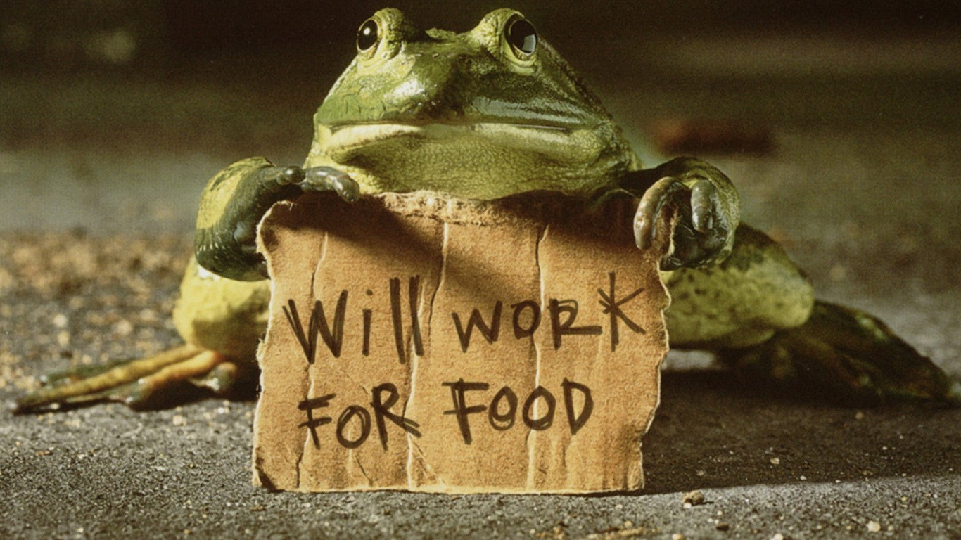 text signs funny Frogs HD Wallpaper