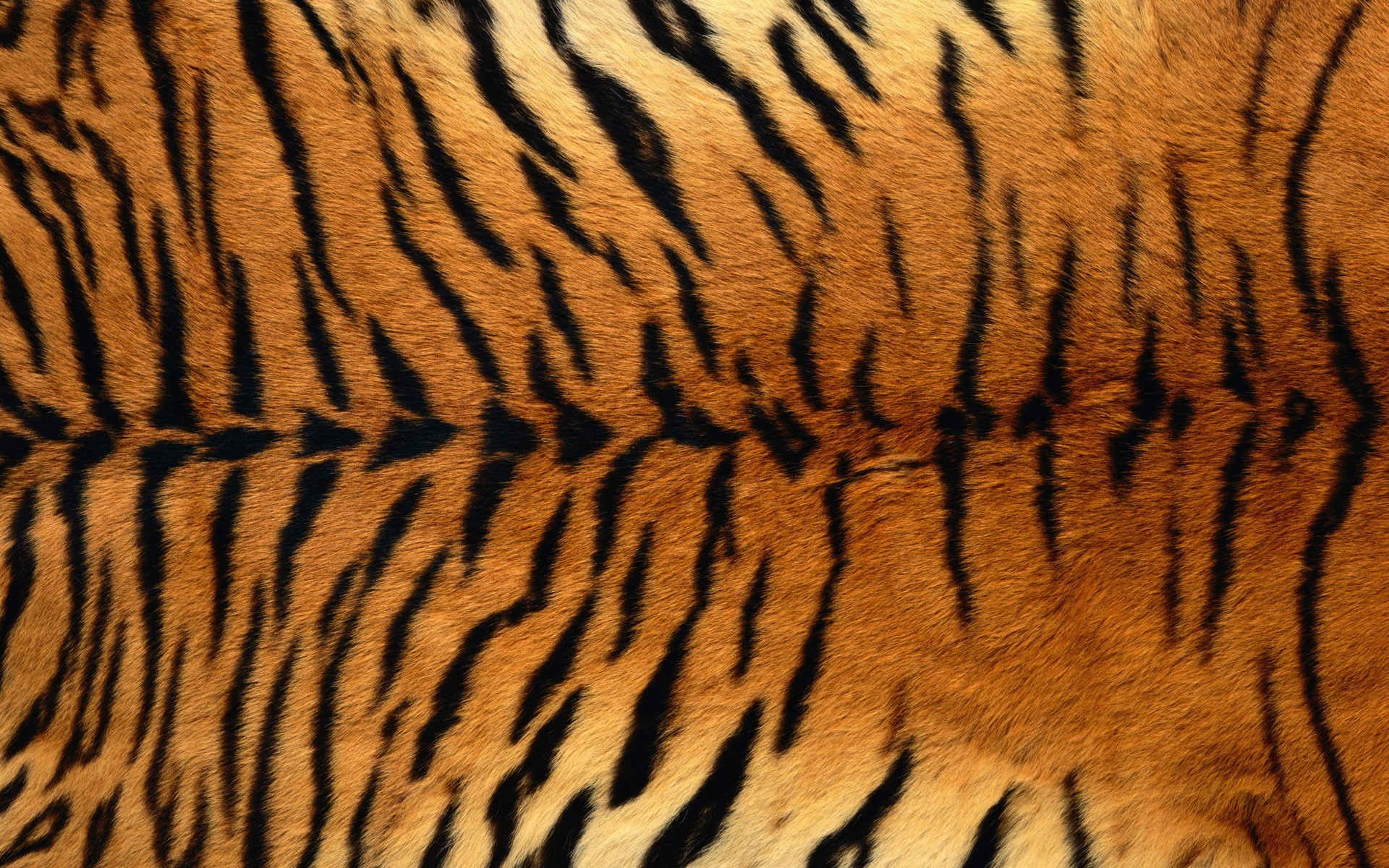 Tigers Textures animal print HD Wallpaper