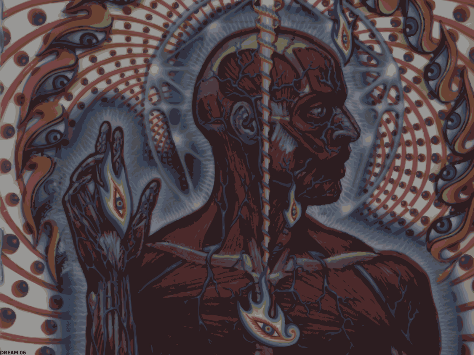 tool Alex Grey Lateralus HD Wallpaper