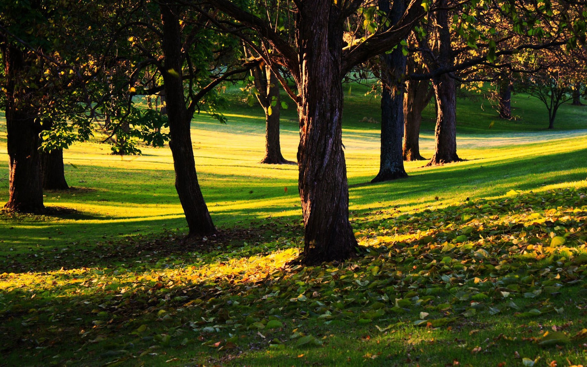 Trees HD Wallpaper