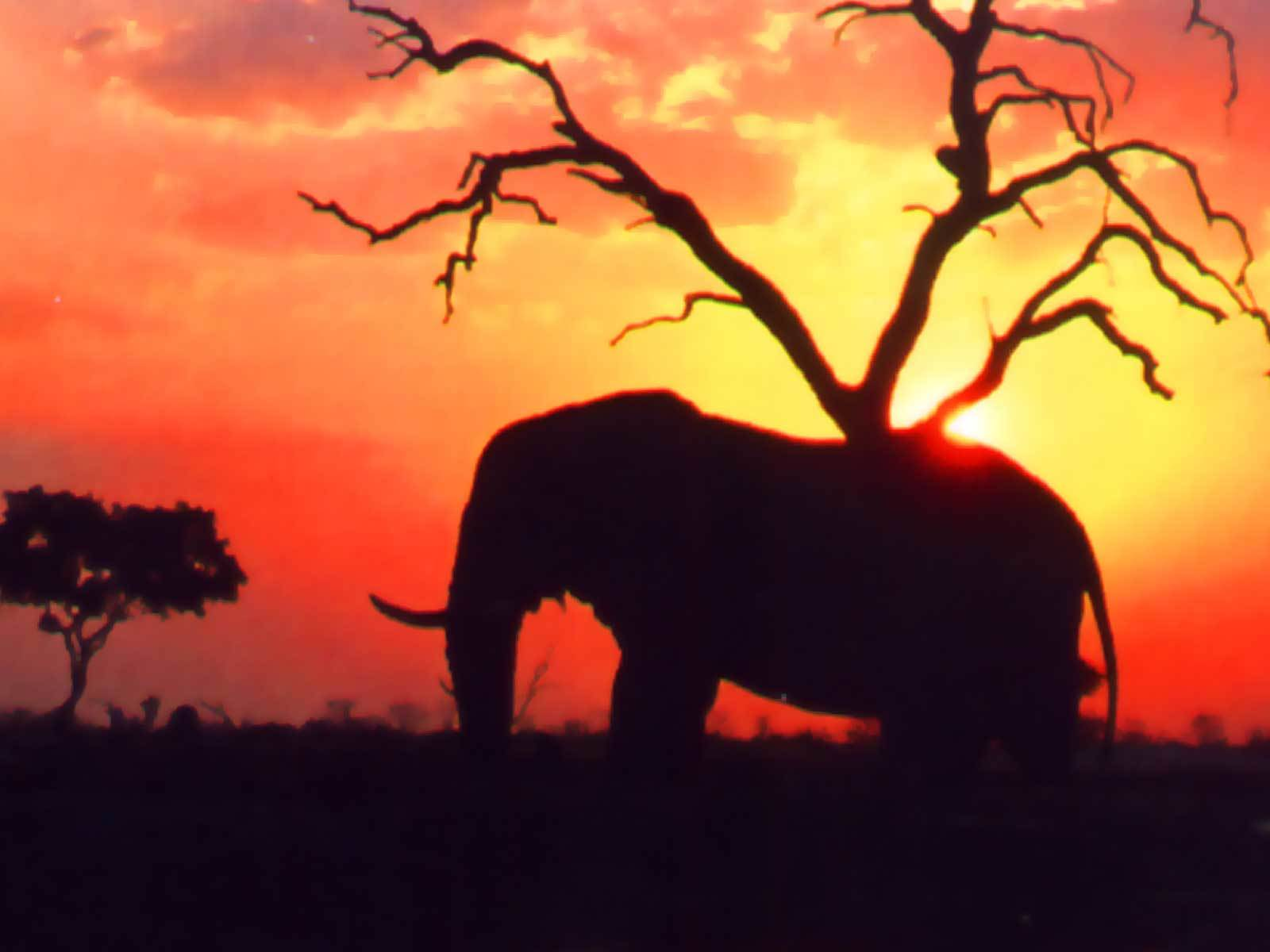 Trees Animals silhouette elephants HD Wallpaper