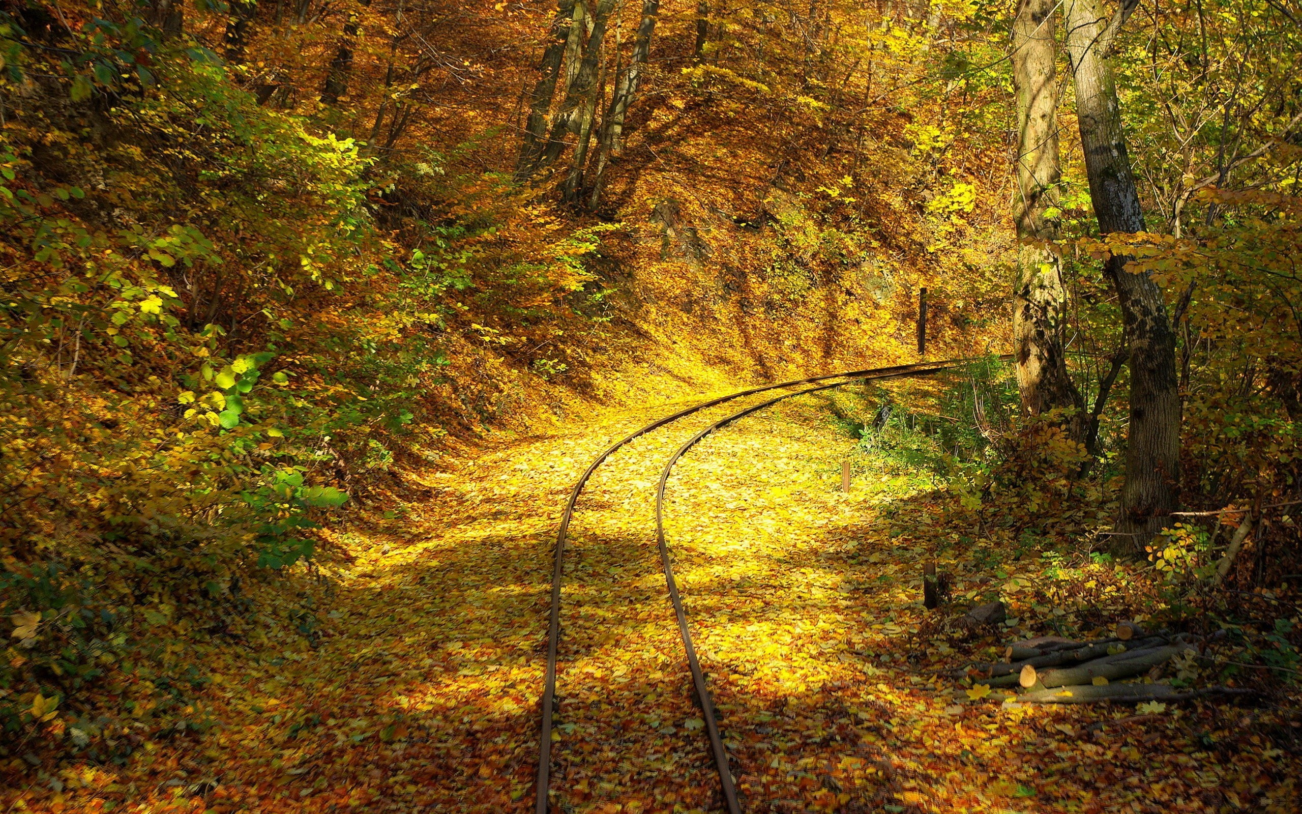 Trees autumn leaves railroad HD Wallpaper