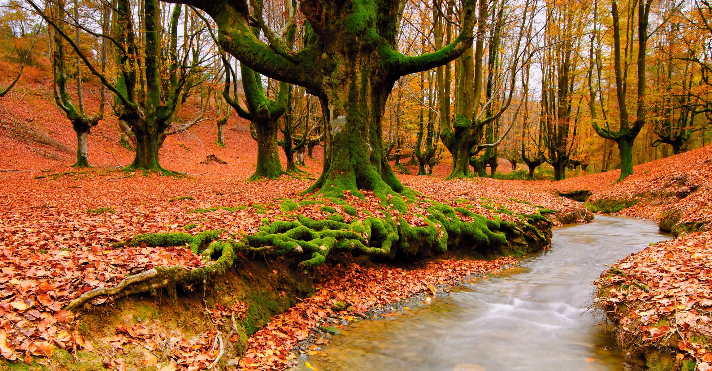 Trees autumn leaves streams HD Wallpaper