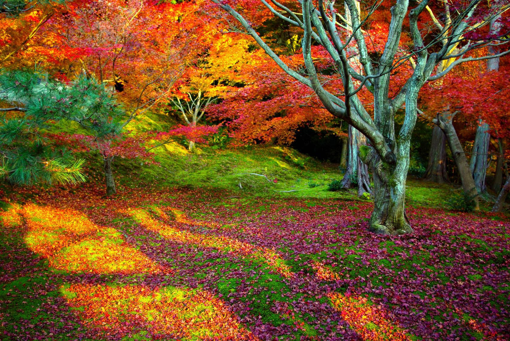 Trees autumn multicolor leaves HD Wallpaper