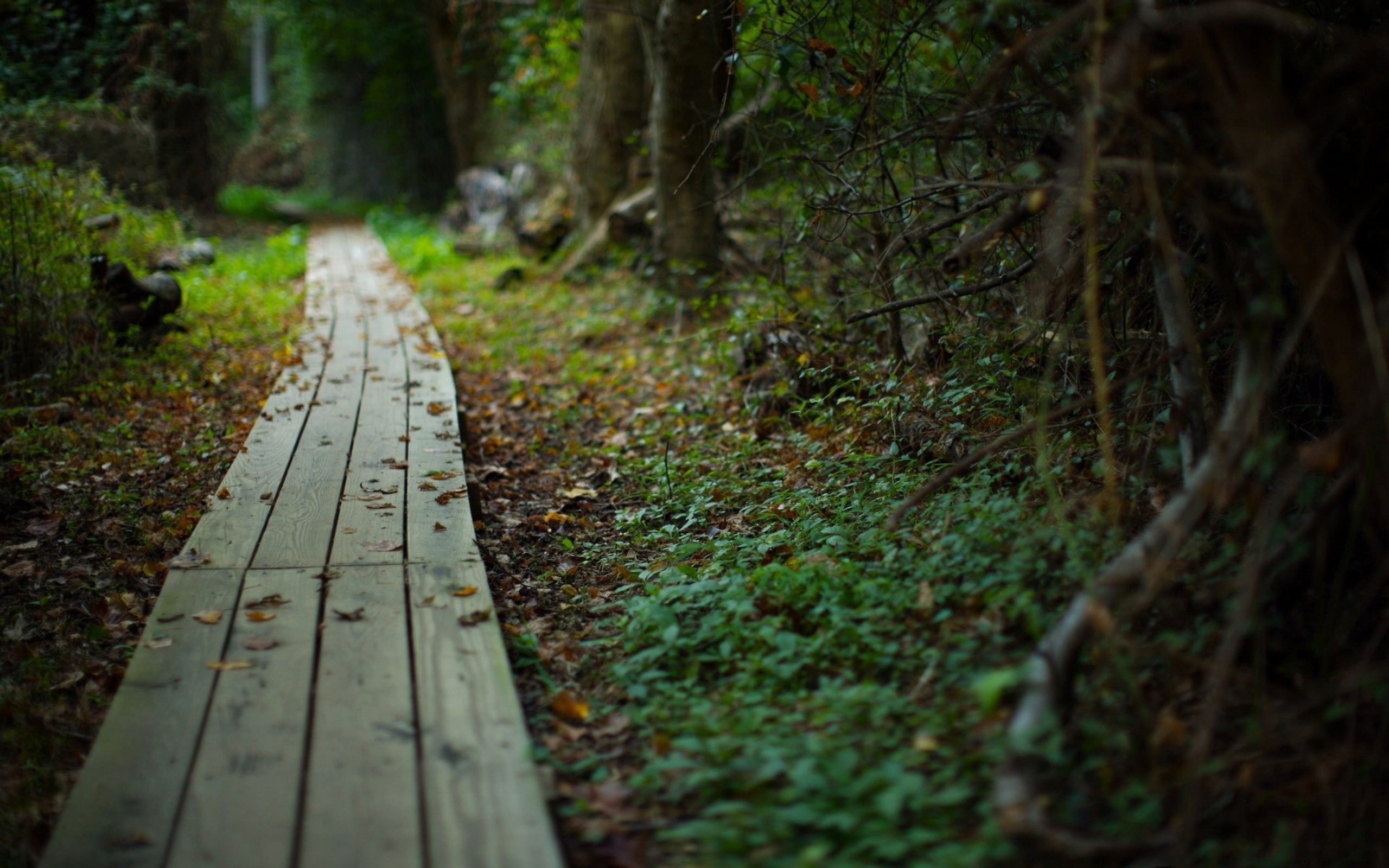 Trees autumn paths boardwalk HD Wallpaper
