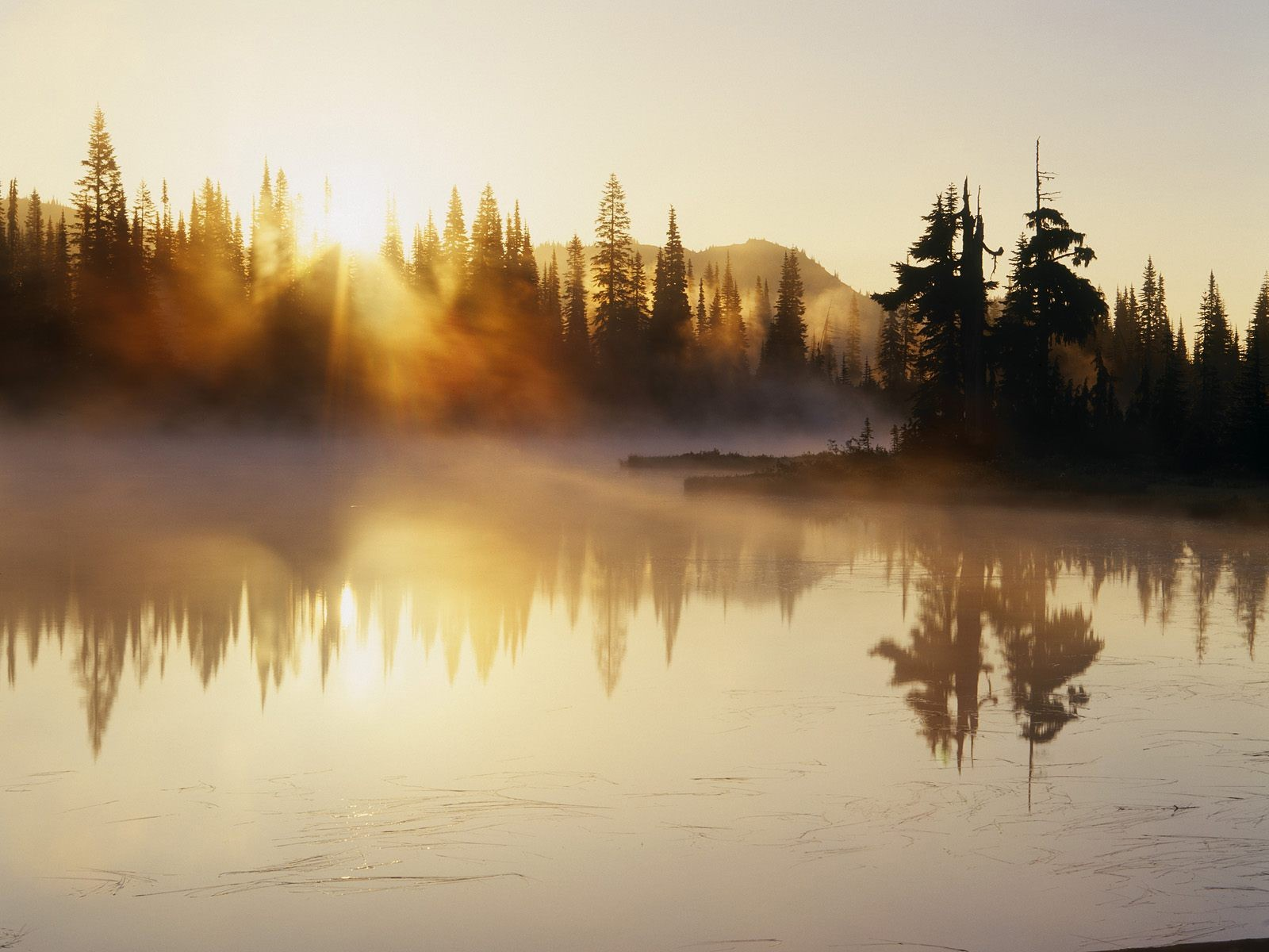 Trees fog lakes HD Wallpaper