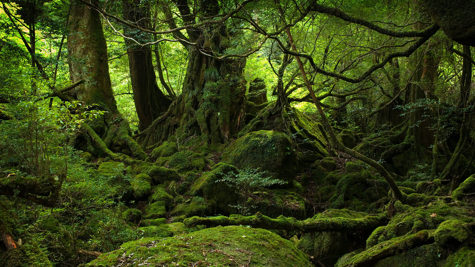 Trees forests moss roots HD Wallpaper