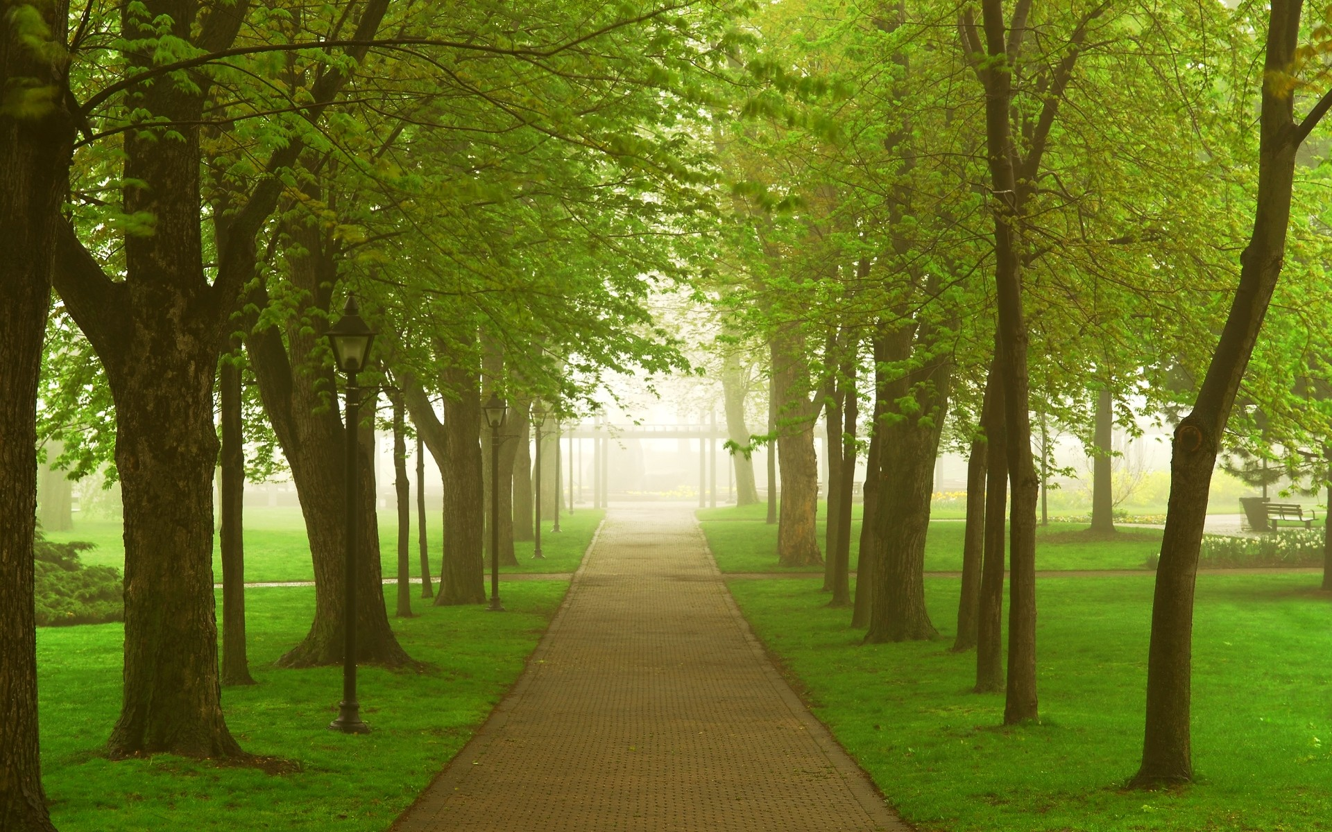Trees grass Parks pathway HD Wallpaper