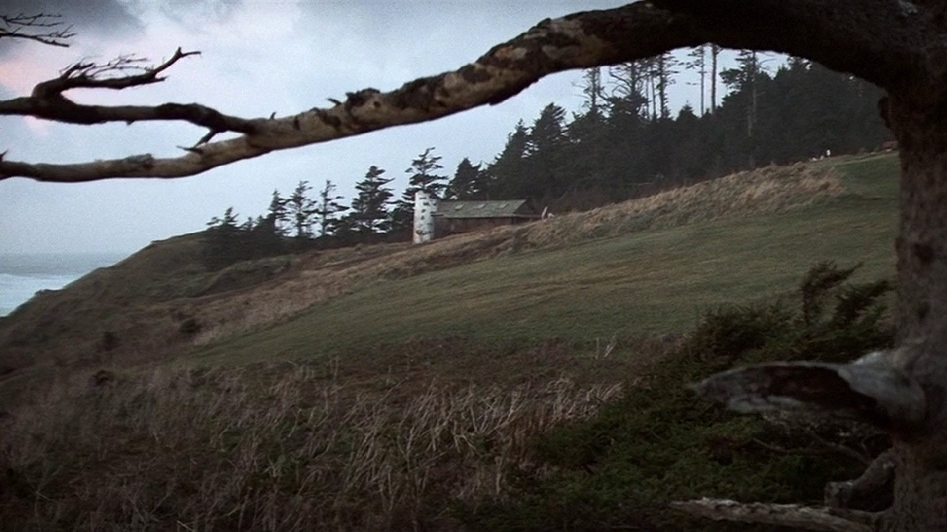 Trees Movies The Goonies HD Wallpaper