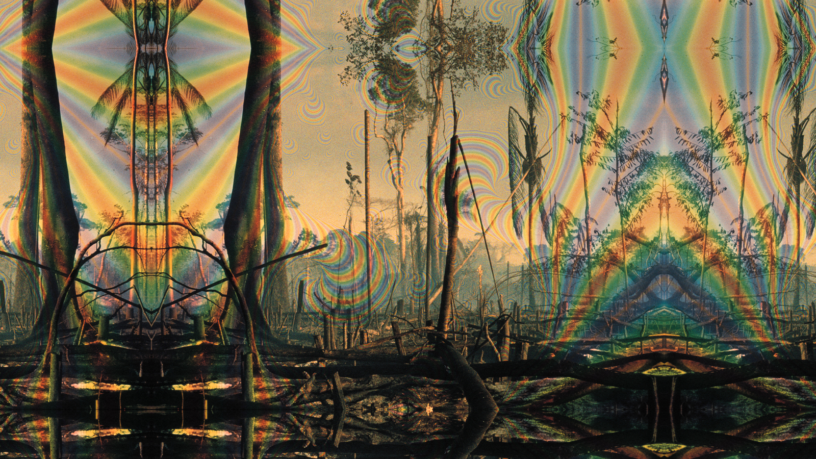 Trees psychedelic destroyed rainbows HD Wallpaper