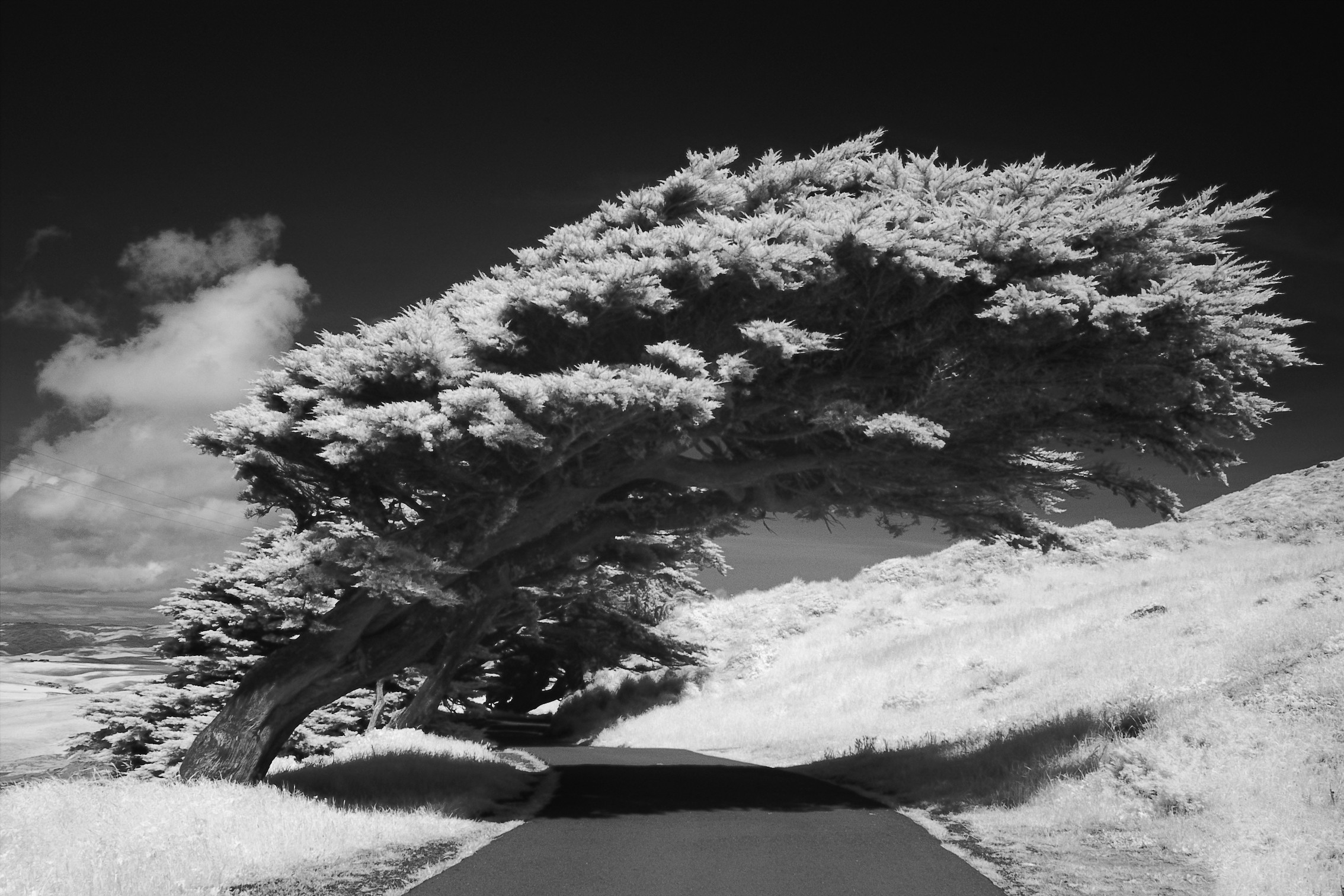 Trees roads monochrome infrared HD Wallpaper