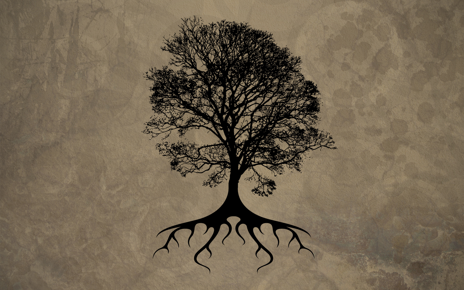 Trees silhouettes roots HD Wallpaper