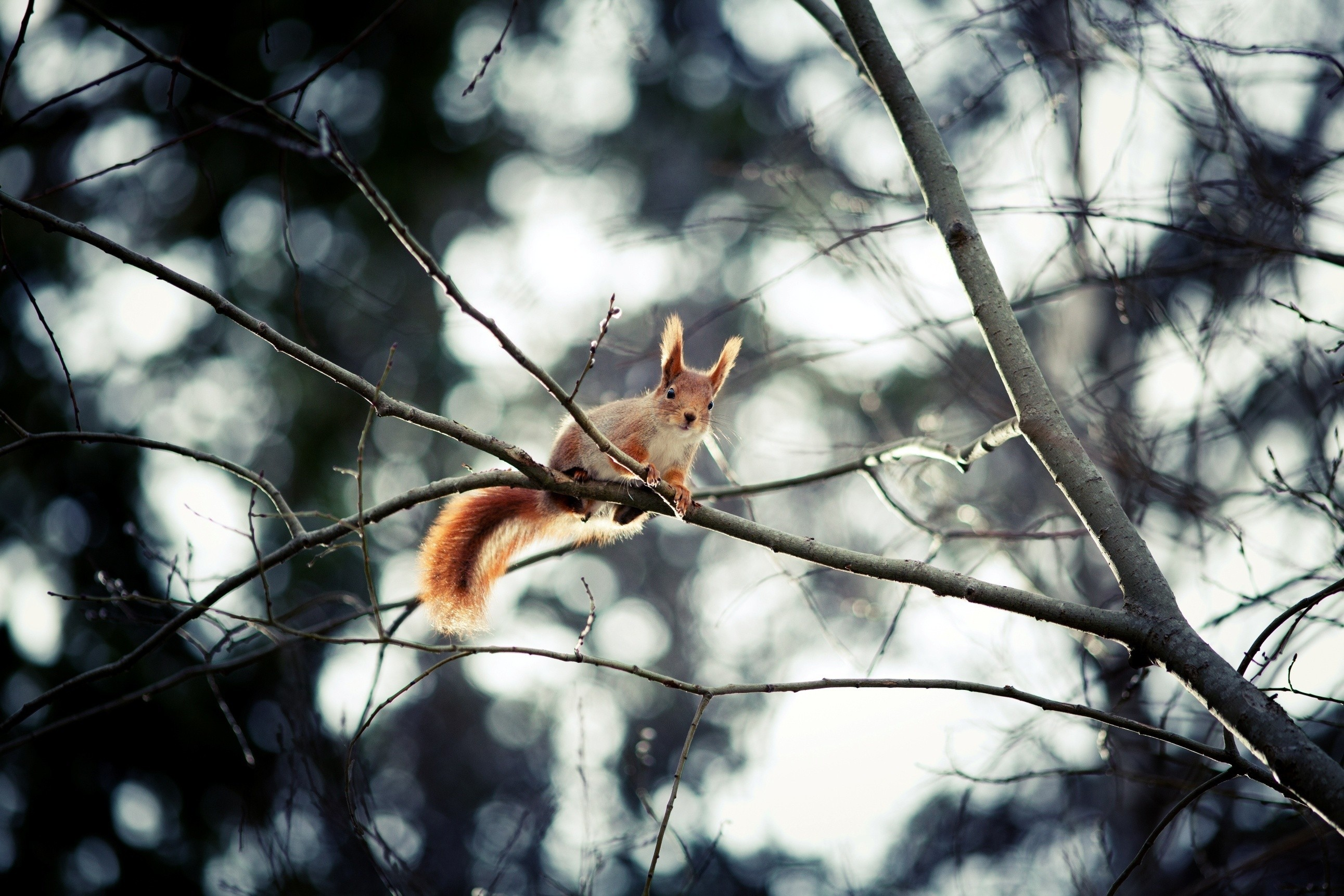 Trees squirrels bokeh depth HD Wallpaper