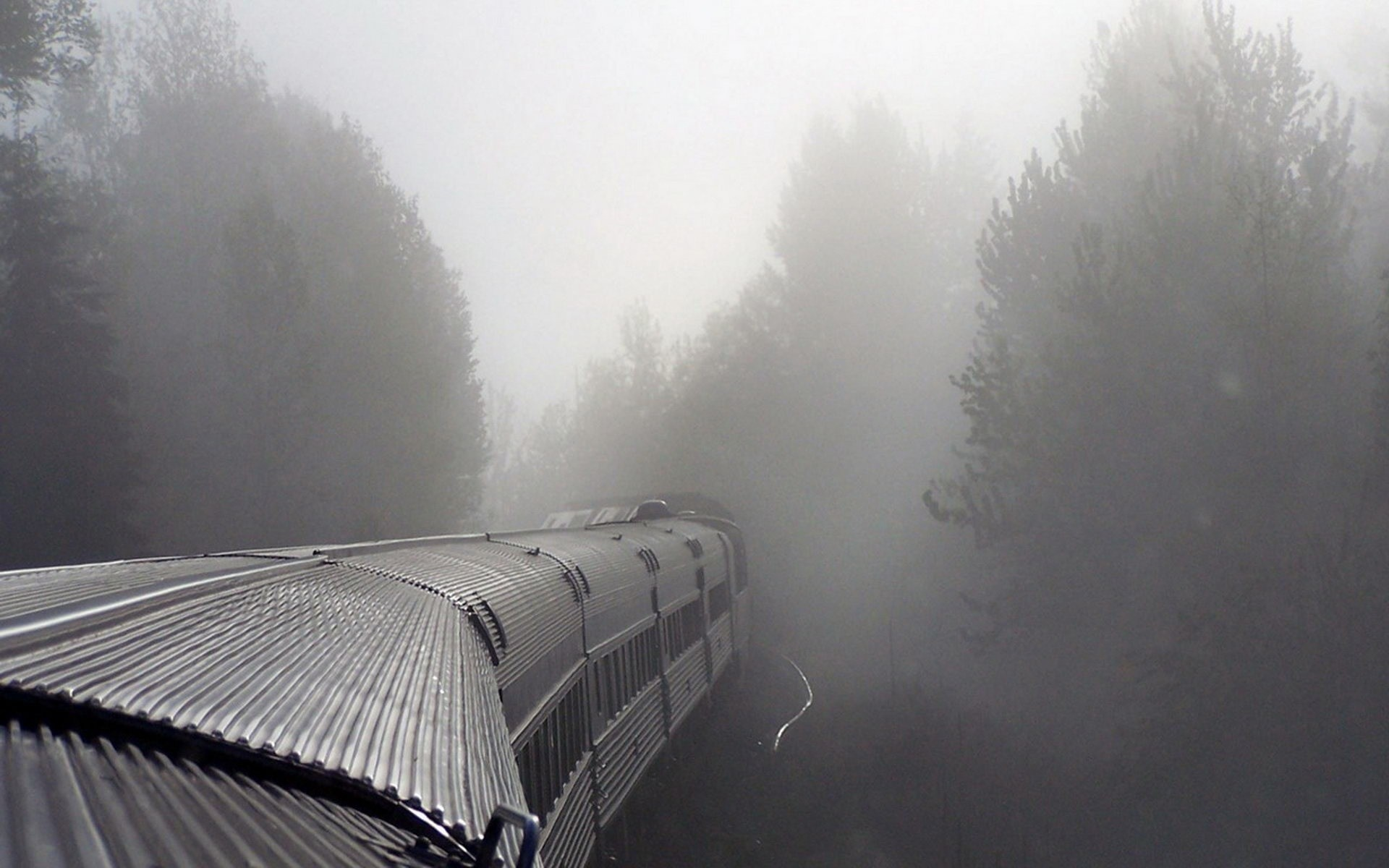 Trees trains fog mist HD Wallpaper