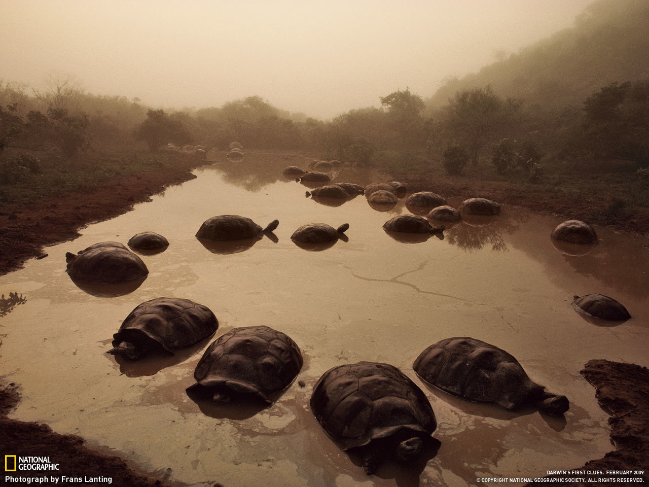 turtles National geographic HD Wallpaper
