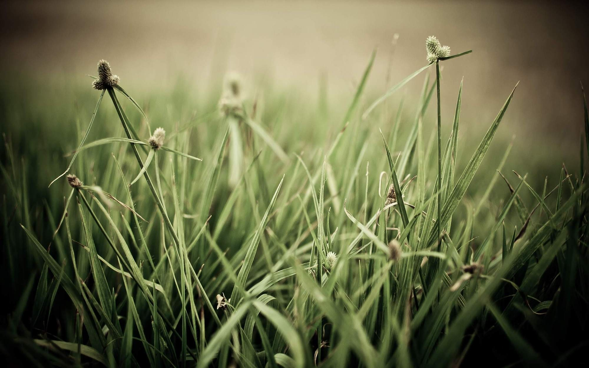 ubuntu grass HD Wallpaper