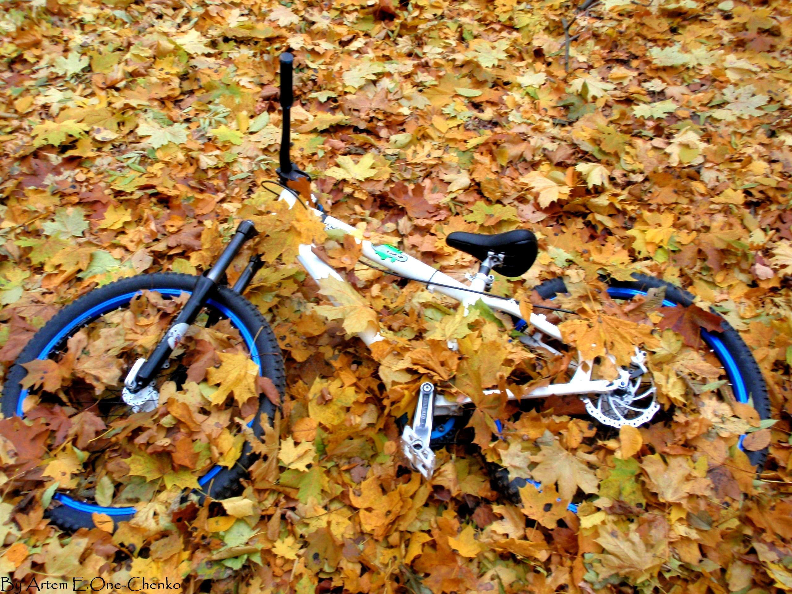 Ukraine cycle fallen leaves HD Wallpaper
