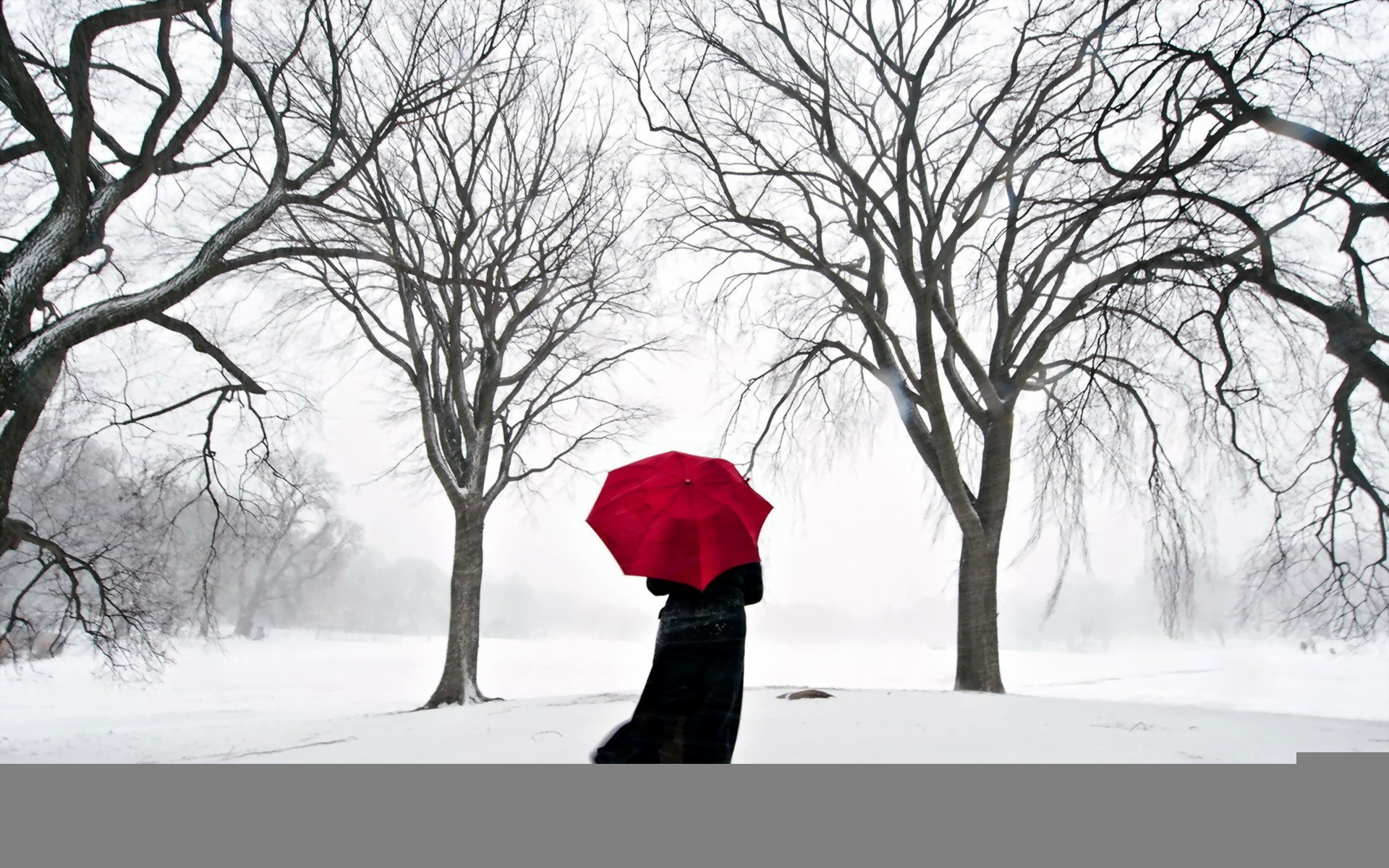 Umbrellas lonely Trees snow HD Wallpaper