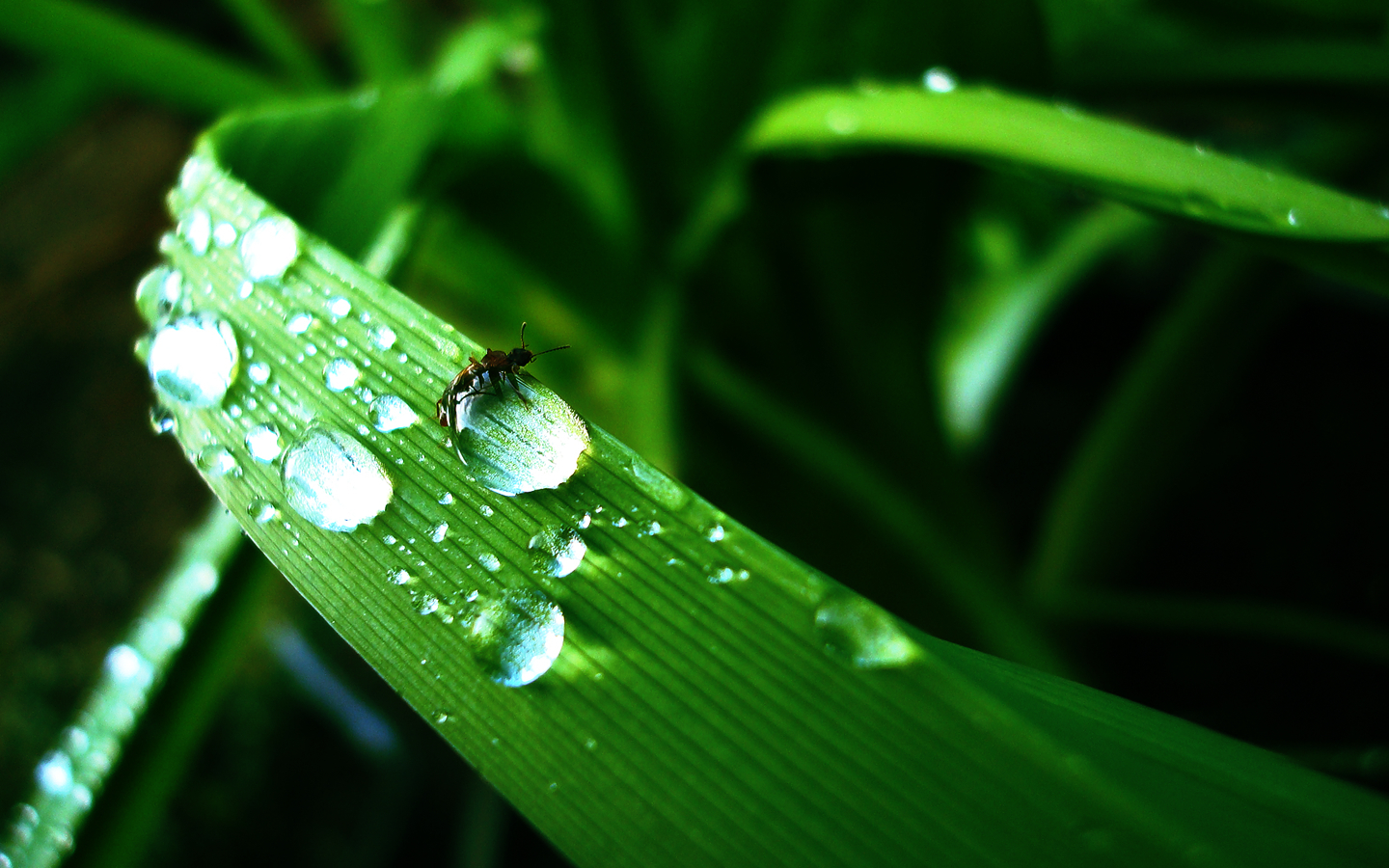 water drop grass drops HD Wallpaper