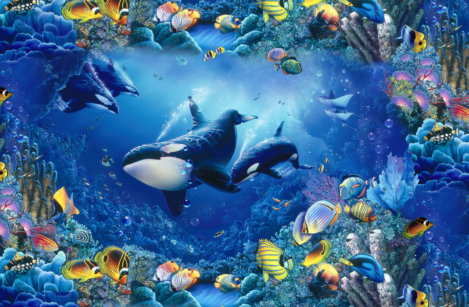 water fish killer whales HD Wallpaper
