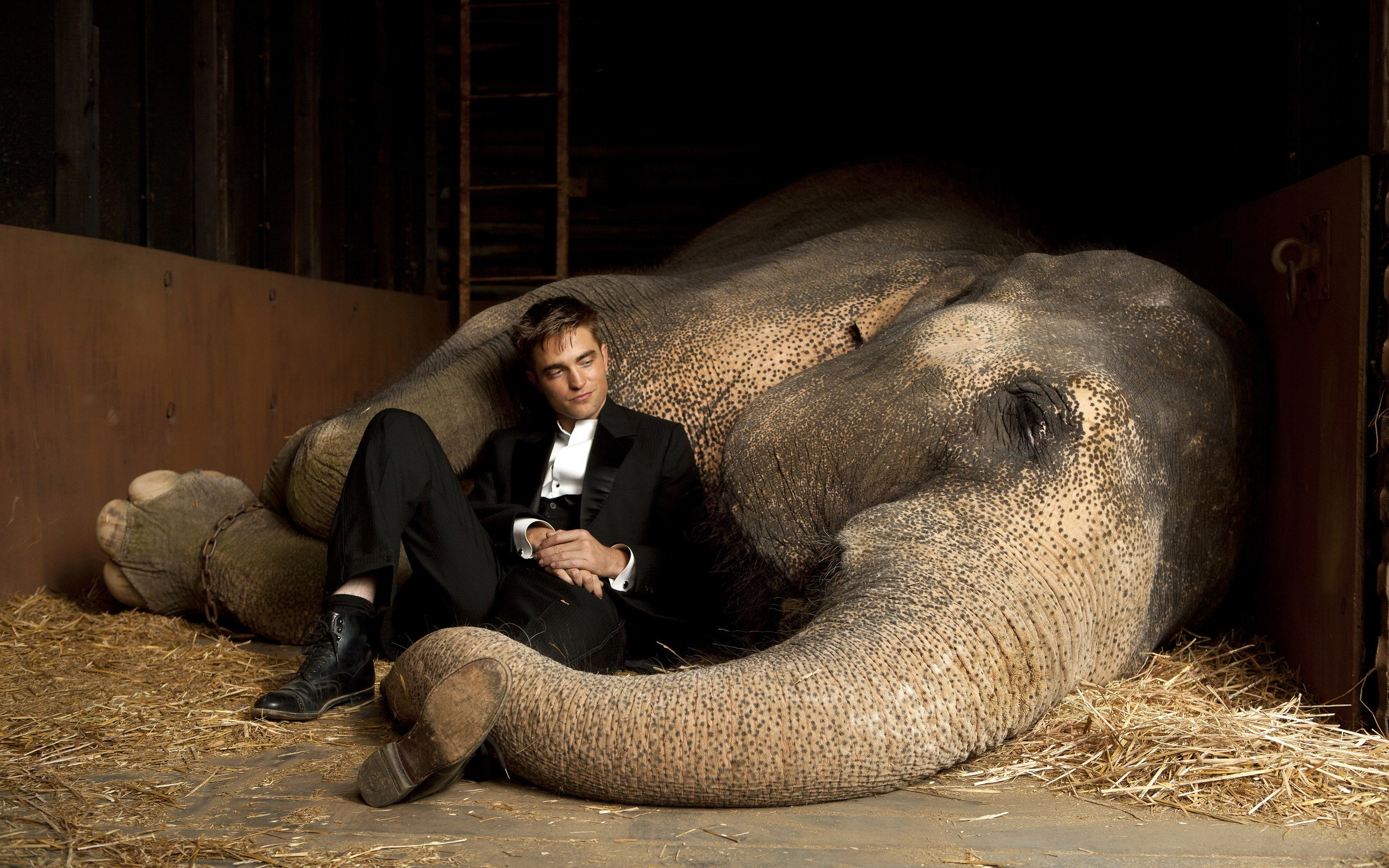 water for elephants elephants HD Wallpaper