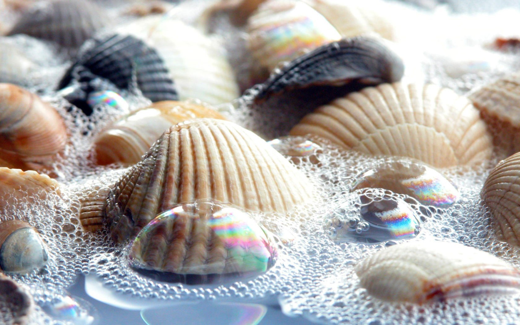water nature bubbles seashells HD Wallpaper