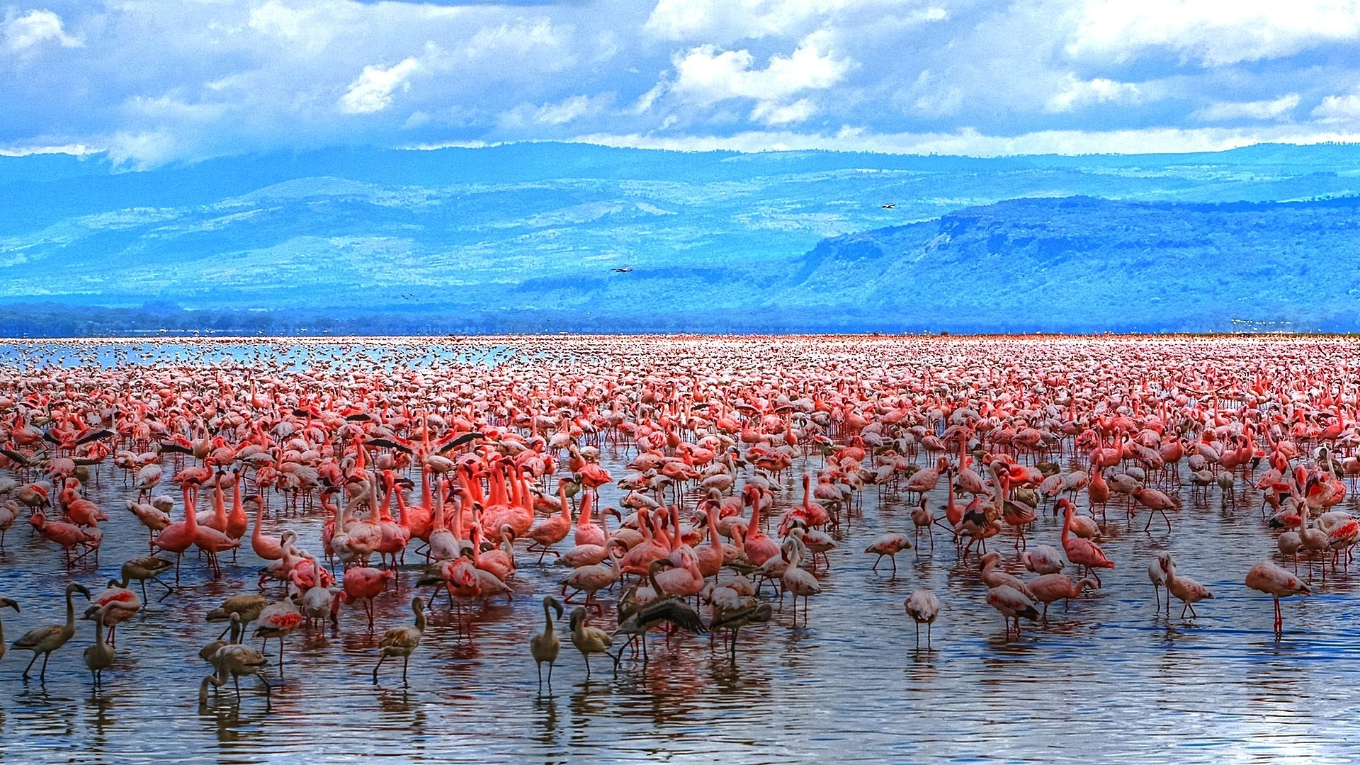 water nature horizon flamingos HD Wallpaper