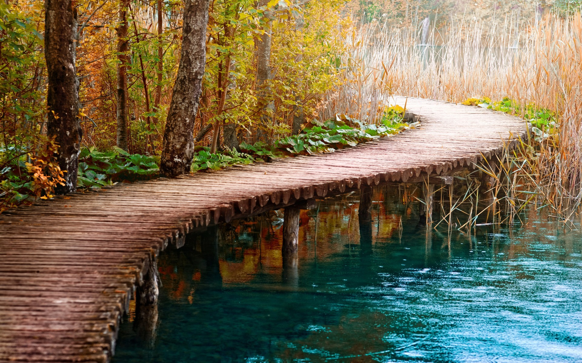 water nature paths woods HD Wallpaper