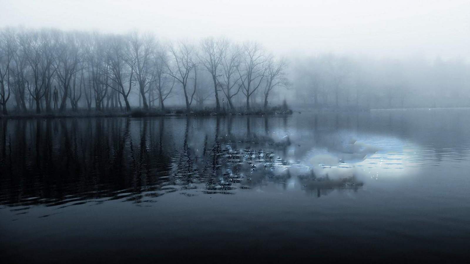 water Trees mist reflections HD Wallpaper