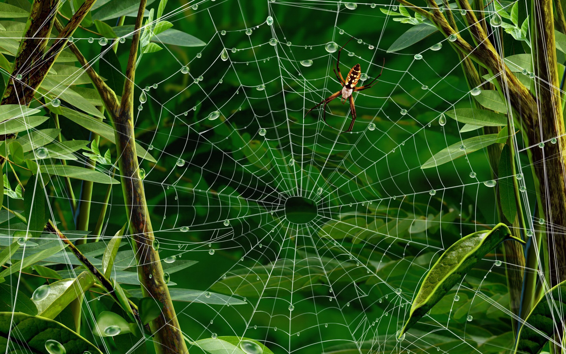 web spiders artwork HD Wallpaper