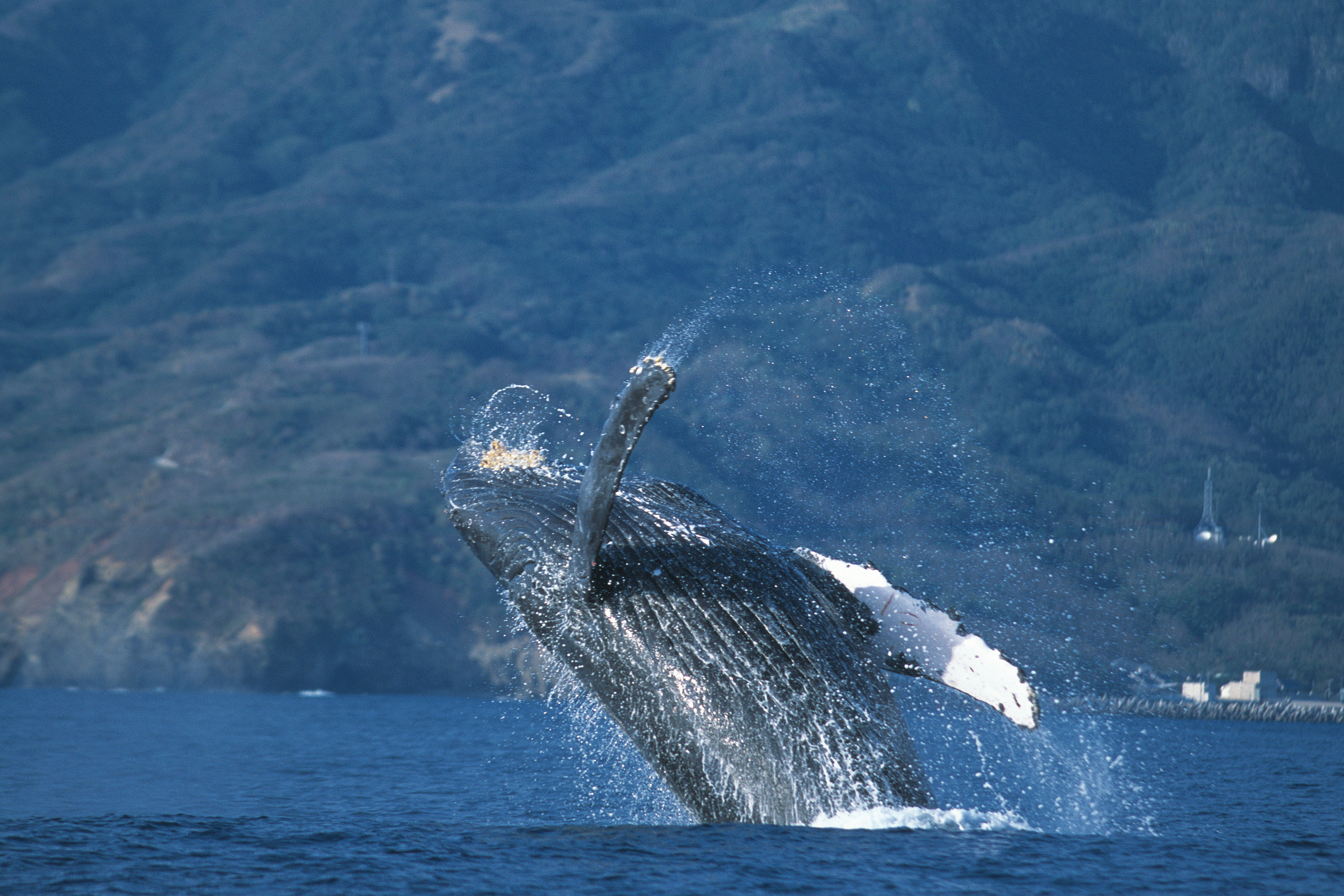 Whales high HD Wallpaper