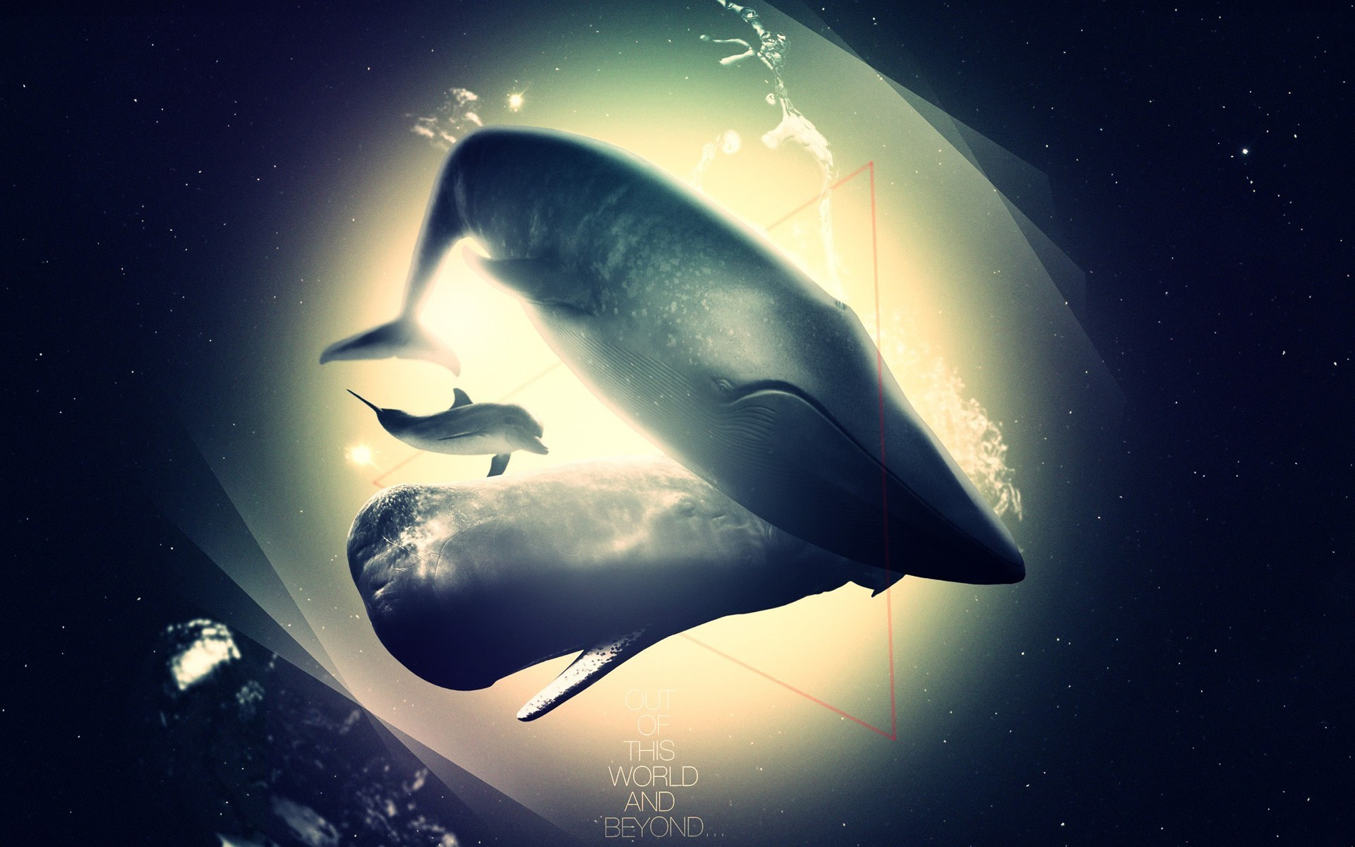 Whales swimming HD Wallpaper