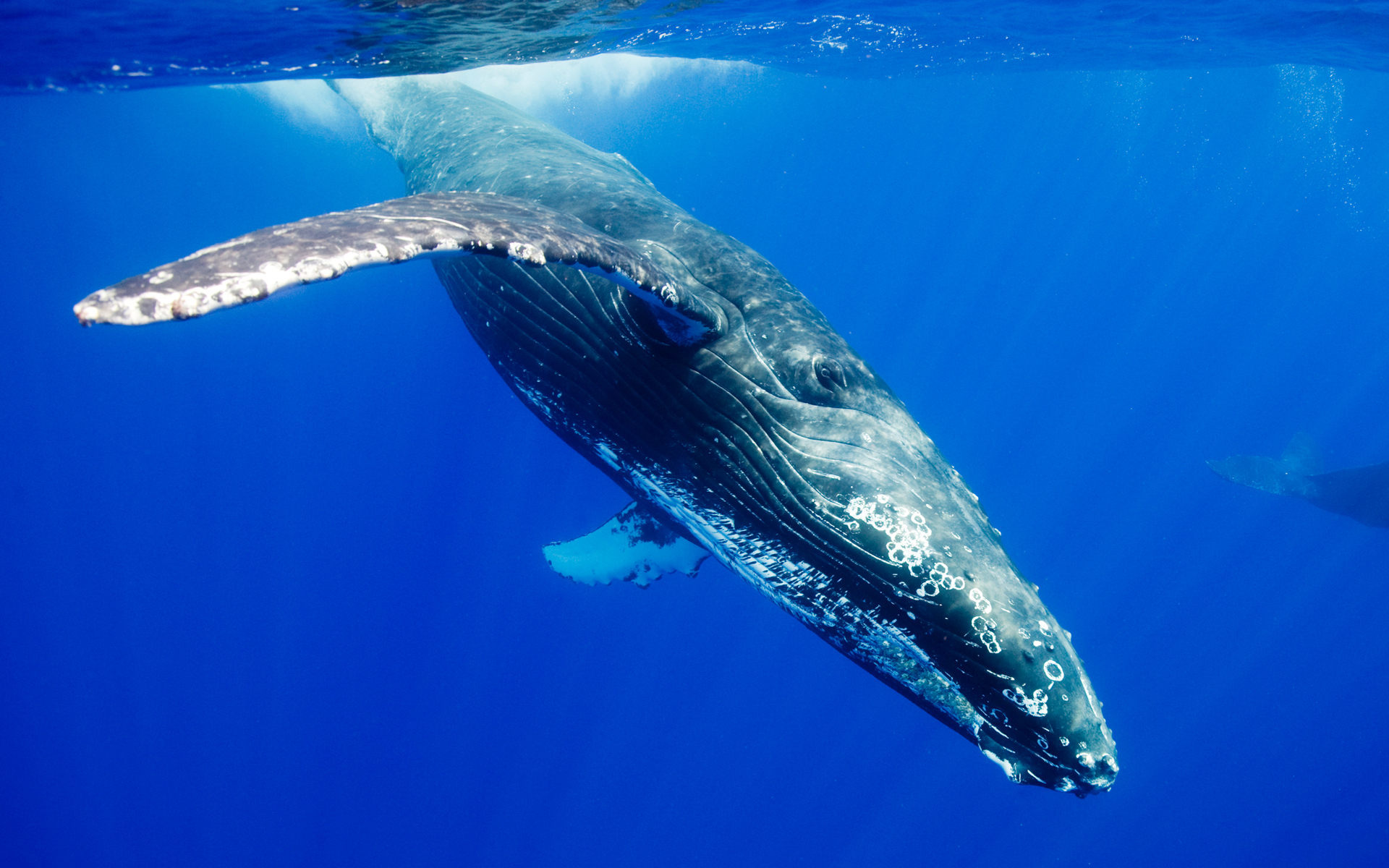 Whales underwater HD Wallpaper