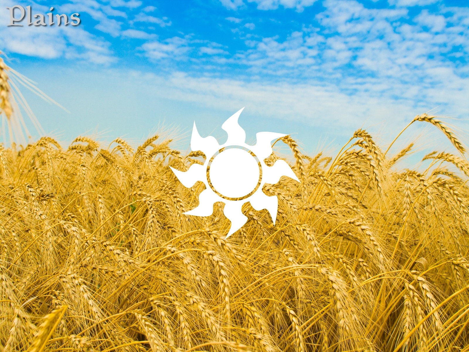 wheat HD Wallpaper
