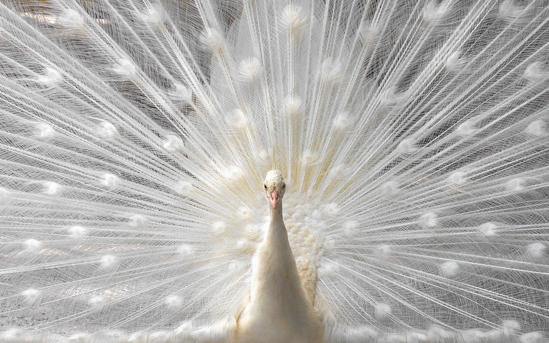 white Birds feathers dancing