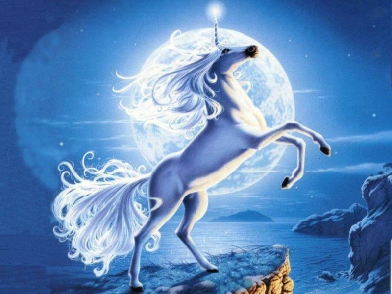 white unicorns Horses HD Wallpaper