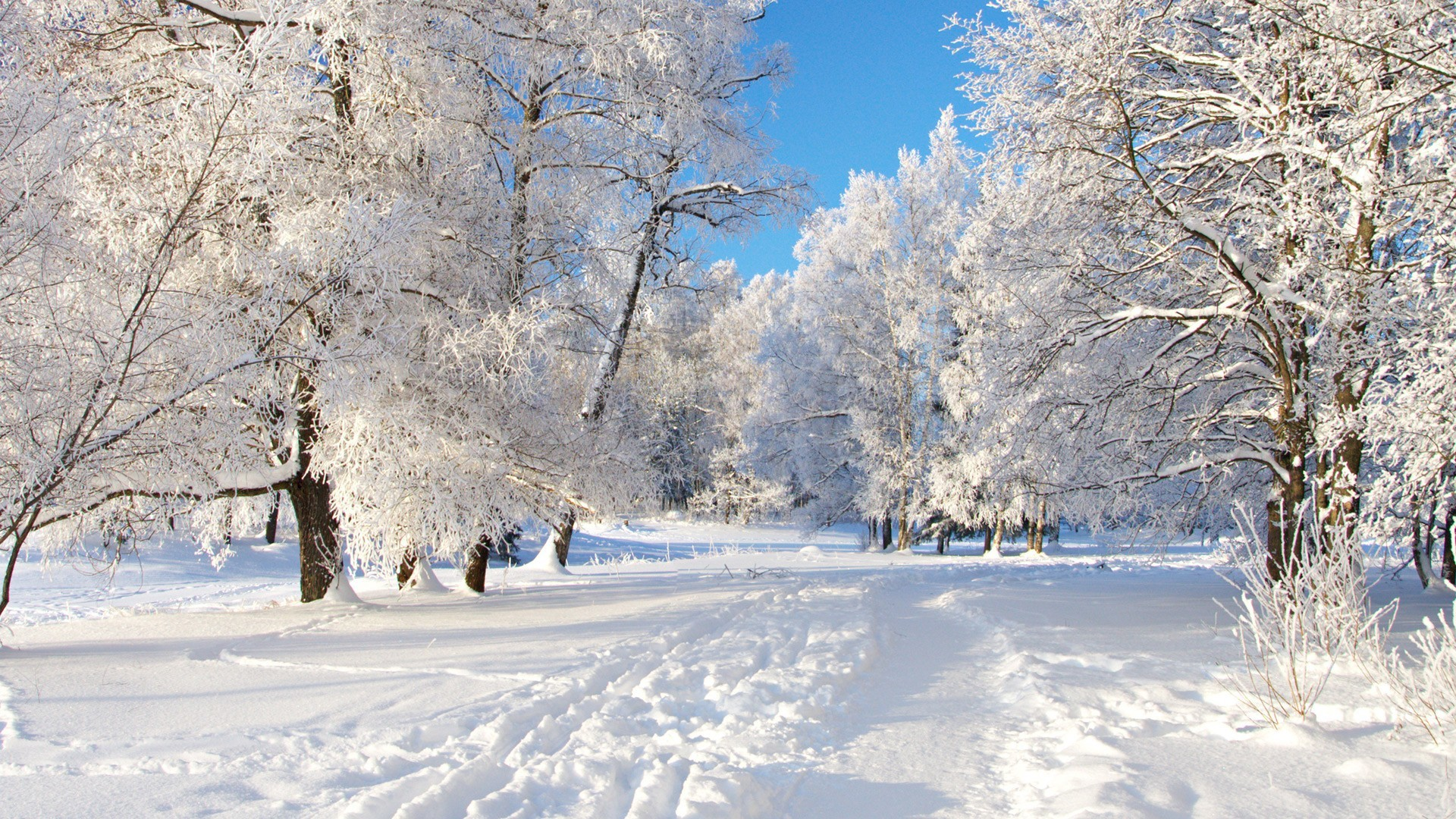 winter snow paths TV HD Wallpaper